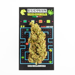 bellastoria-marijuana-light-budman-min