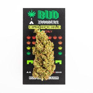 bellastoria-marijuana-light-budinvaders-min