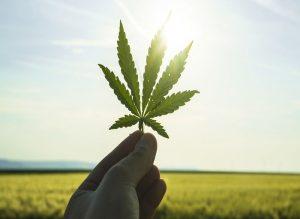 bellastoria-Marijuana-light-una-risorsa-pulita